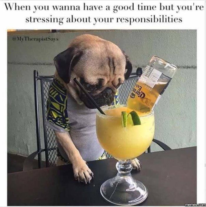Funny Birthday Drinking Meme : Funny dog drinking meme shit pinterest