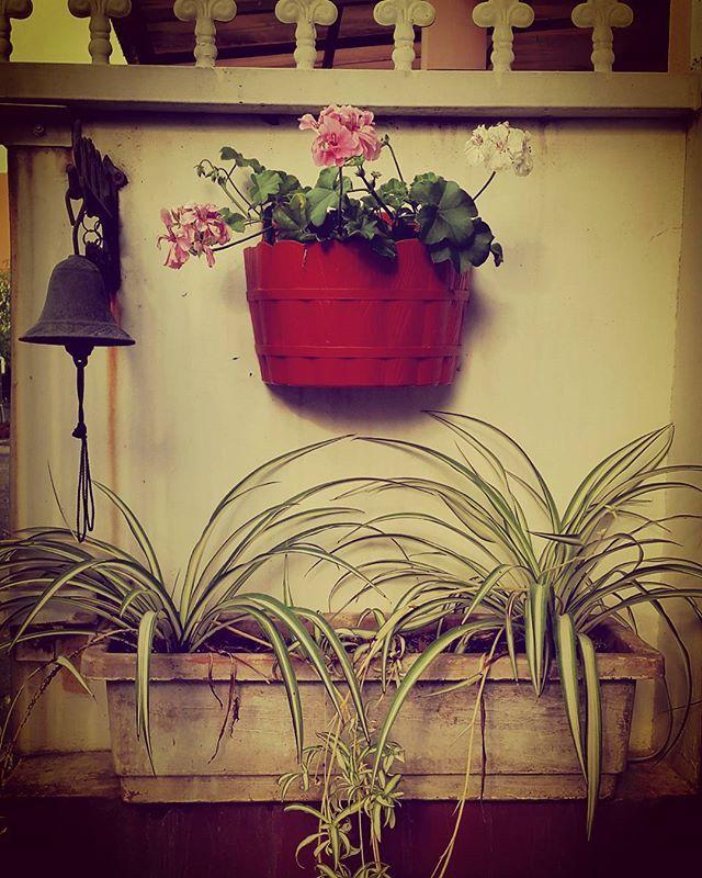 Nemplok. #bell #flowers #geranium #lilygantung #verticalgarden #minigarden #wall #aroundthehouse