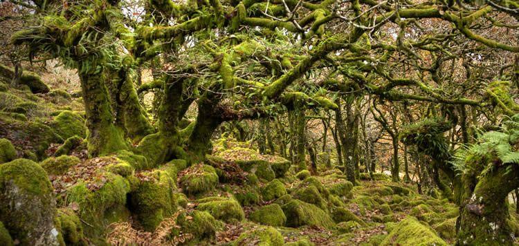 Praten met bomen - communicatie bij bomen