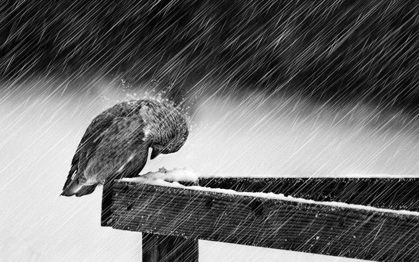 raining and the bird ile ilgili görsel sonucu