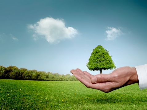 Save Trees Save Nature Save Earth Save Trees