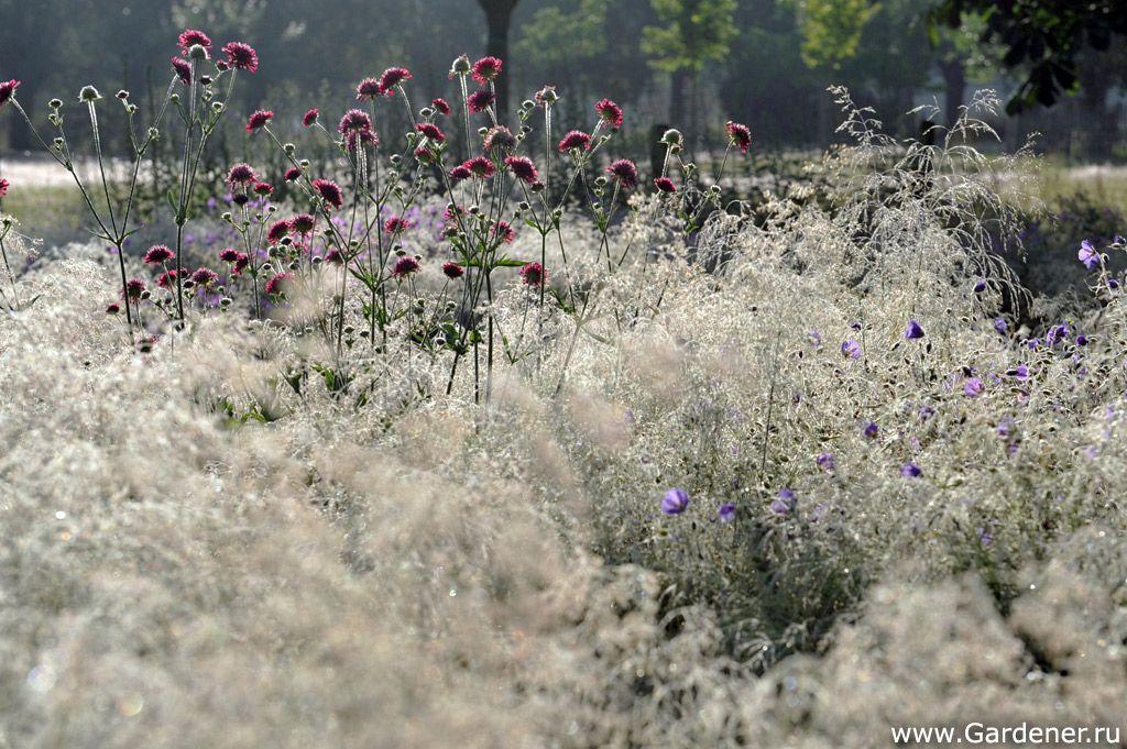 Сад Криса Гиселена в Бельгии