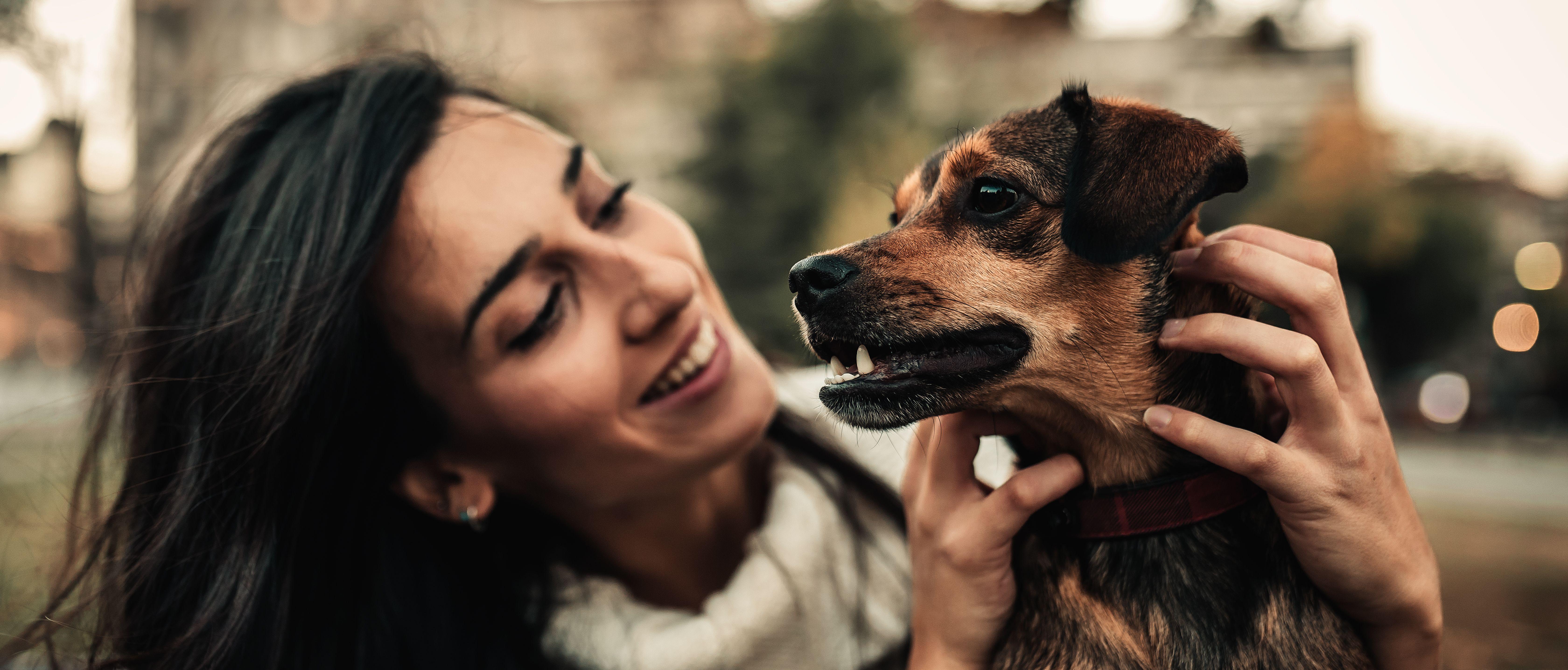 New Pet Insurance Quotes Homepage Hero Pet Parents Rule Pet
