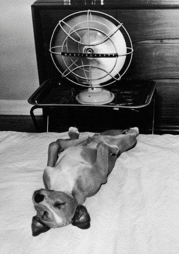 Photographer Jack Tinney S Dog Cookie Cooling Himself With