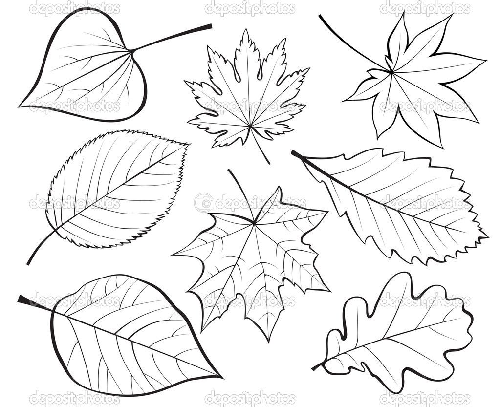 Set of leaves — Stock Vector © iaRada #6644163 | Cards: Thanksgiving ...
