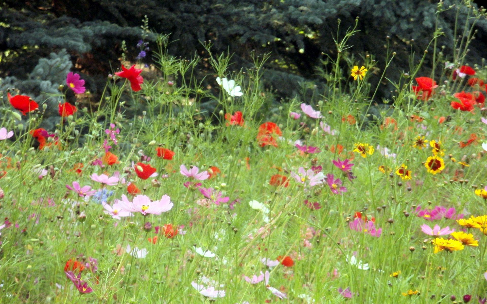 perennial wildflower garden design colorado native landscaping