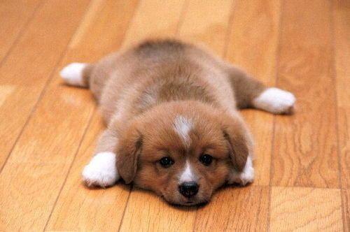 Puppy puppy puppy =D <3