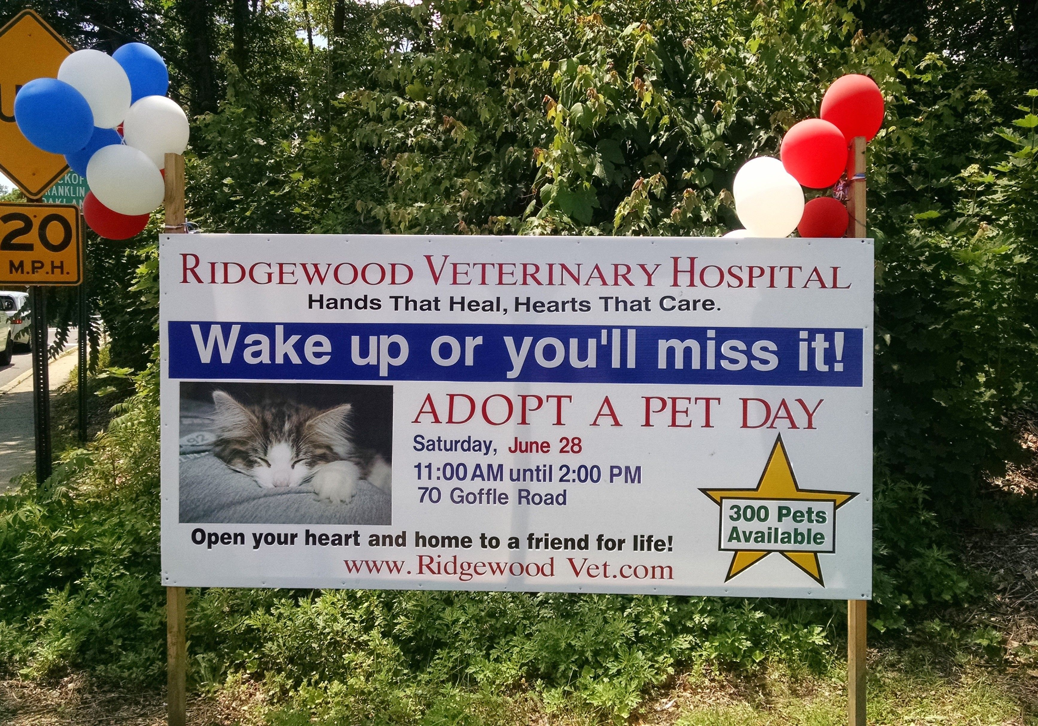 The Adopt A Pet Day Sign Wake Up Or You Ll Miss It Pet Day Veterinary Hospital Veterinary Care