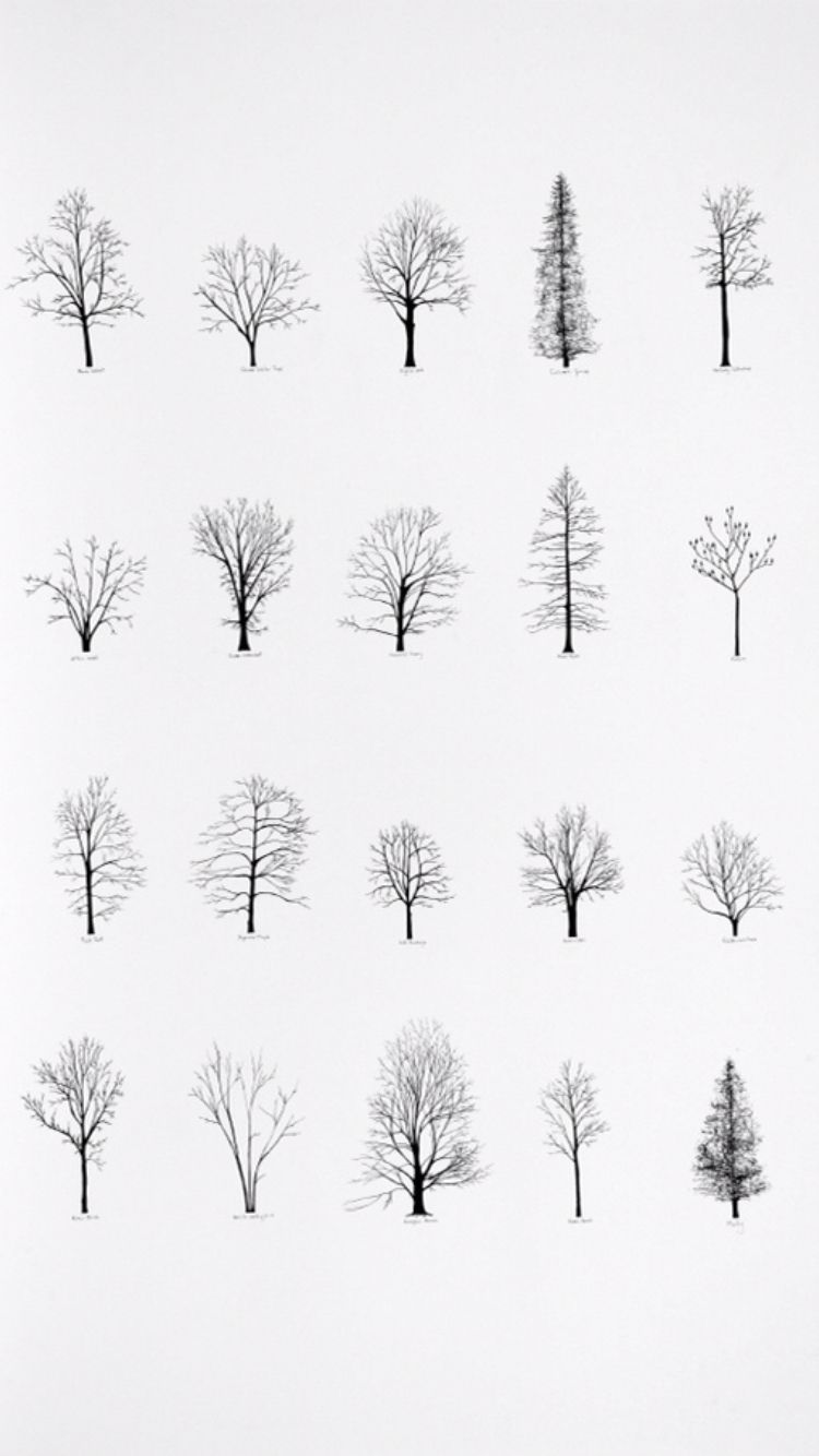 Line Art Of Trees : Drawings tattoo spiration art … draw grafica pinte…