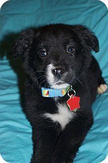 Pin On Pet Adoption Board 2