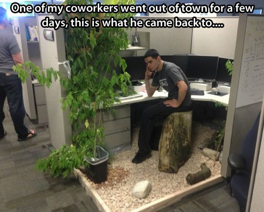 Not sure if prank or awesome makeover funny stuff for Cool things for your cubicle
