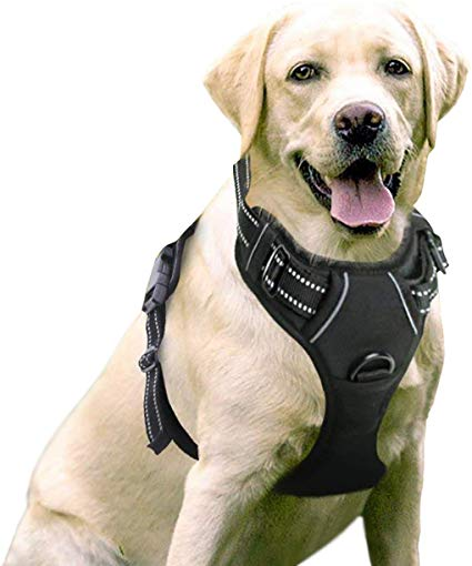 Amazon Com Rabbitgoo Dog Harness No Pull Pet Harness Adjustable Outdoor Pet Vest 3m Reflective Oxford Material Vest In 2020 Dog Harness Pet Harness Large Dog Harness
