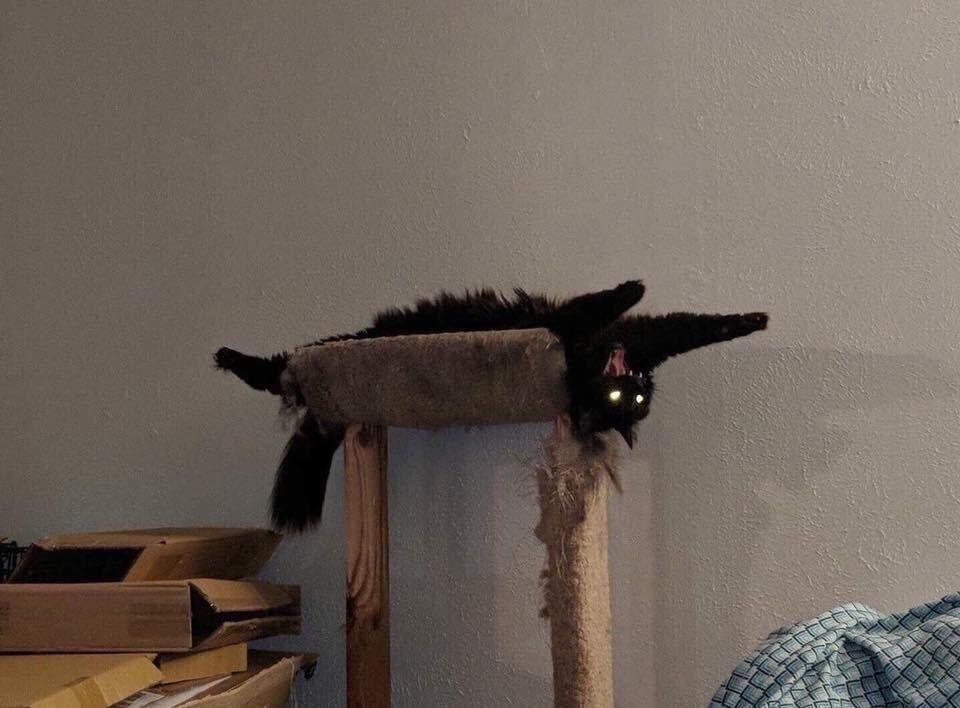 """Photo of 17 Katzen, bei denen du dich fragst: """"Sind die noch ganz normal?!"""""""