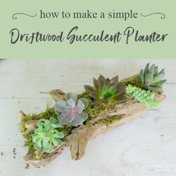 Photo of How to make a Driftwood Succulent Planter