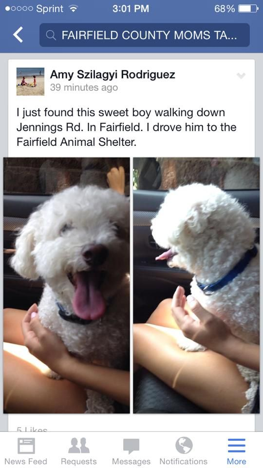 Found And Impounded In Fairfield Ct 8 25 14 Animal Shelter Find Pets Boy Walking