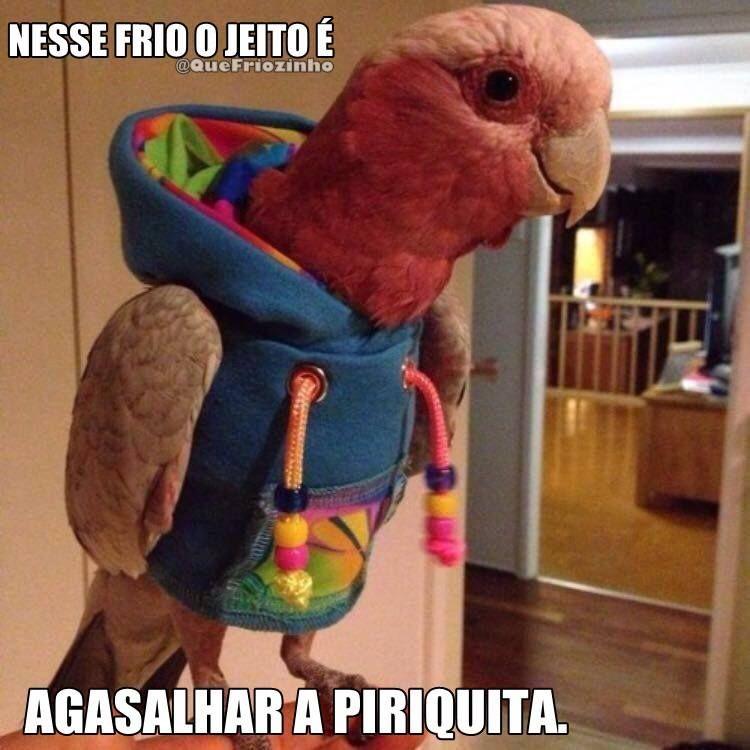 Alasca Brasileira Os Melhores Memes E Gifs Sobre O Frio Que Chegou Passaros Engracados Frases De Frio Engracadas Imagens Hilarias