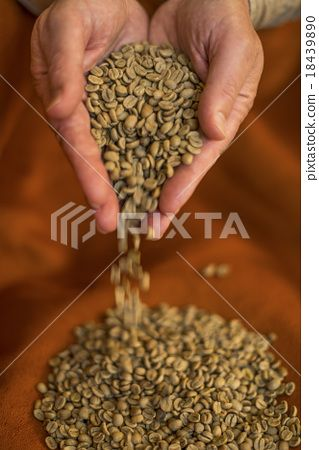 Hands pouring raw coffee beans red background