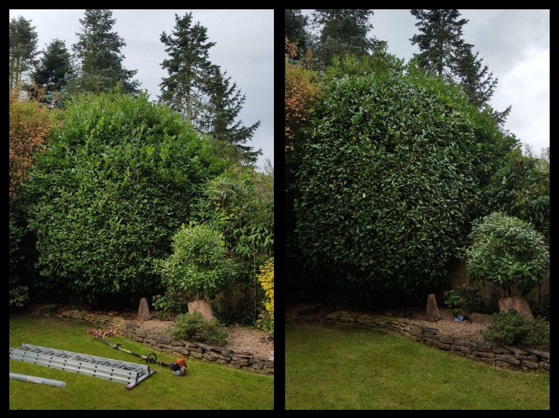 Baumschnitt und Sträucherschnitt für gesunde Pflanzen und schöne