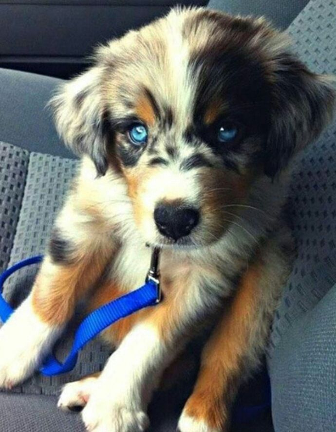 Bts Imagines X Reader Dog Crossbreeds Cute Animals Puppies