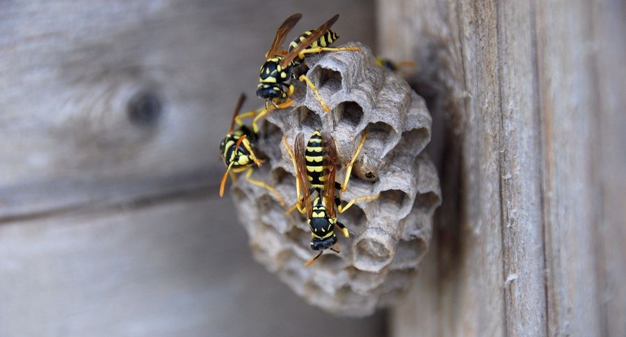 Identify control bees this spring and summer with expert