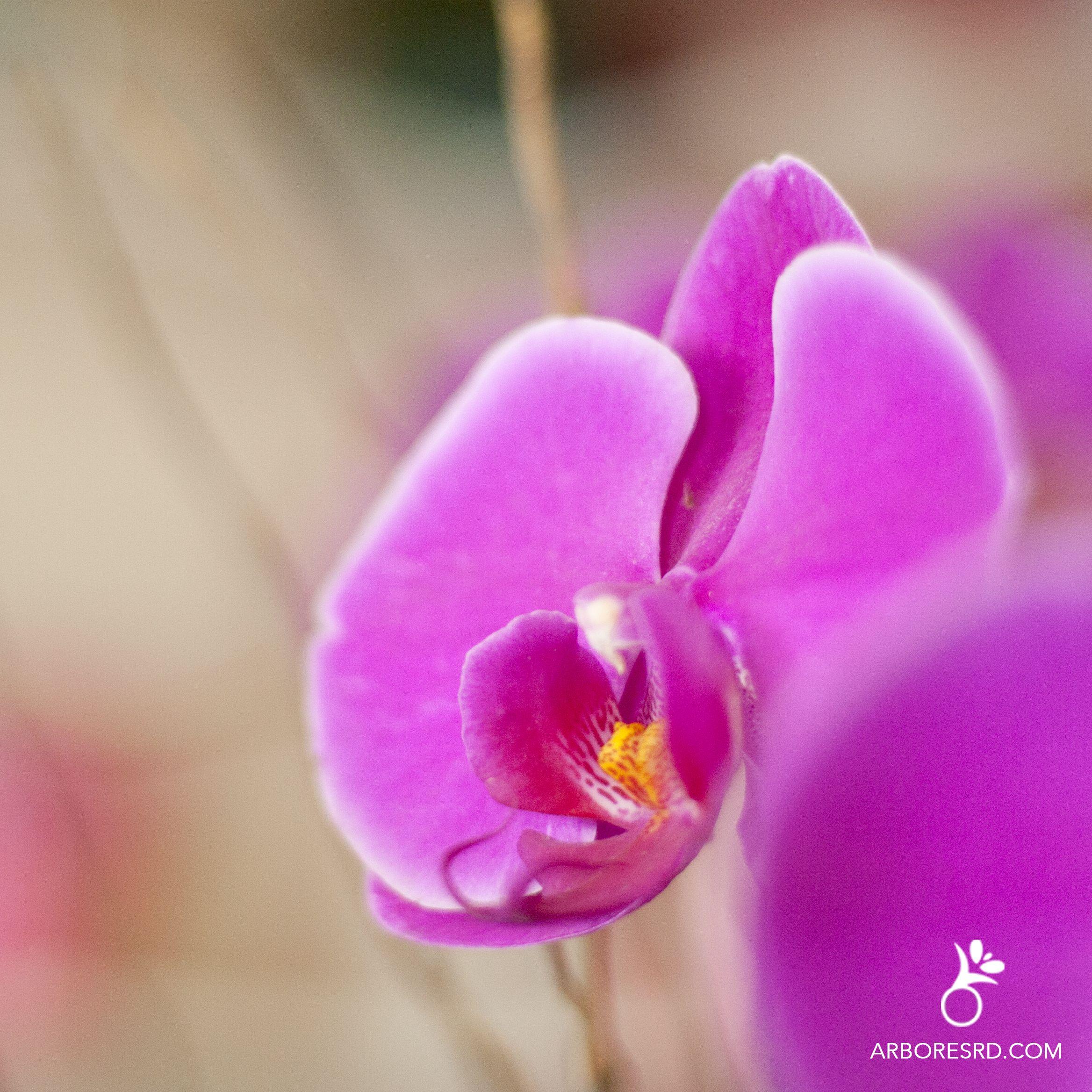 Orquídea Rosa #ArboresRD