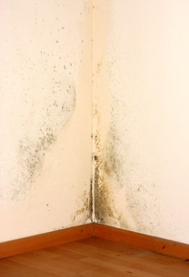 Chaetomium Is One Of The More Common Types Mold Found In Homes This Kind Usually Results From A Chronic Moisture Problem