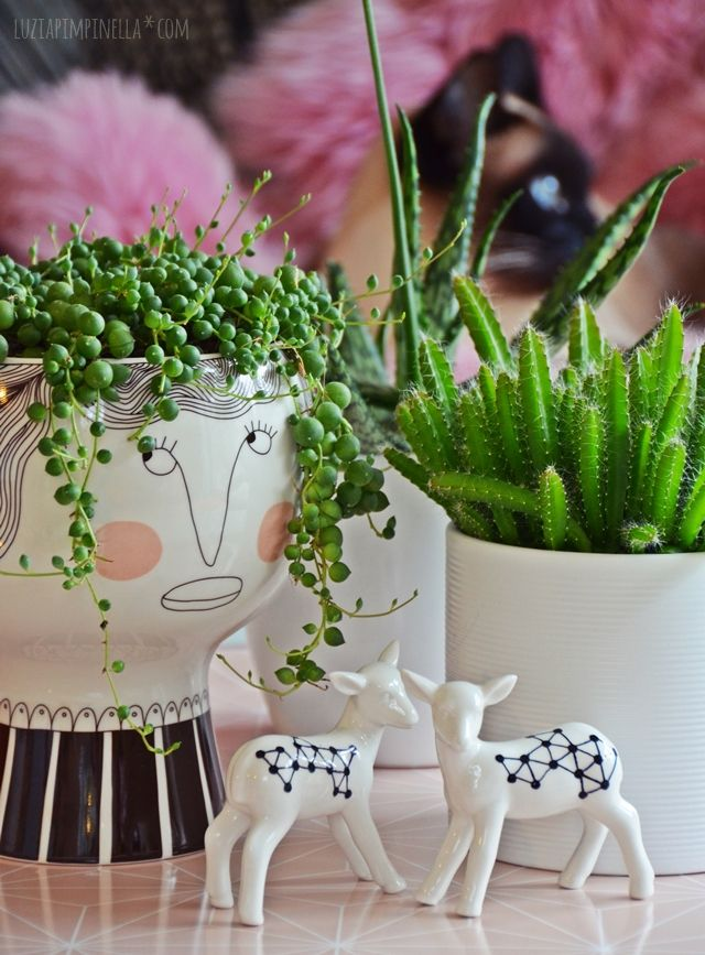 Luzia pimpinella interior trend zimmerpflanzen sukkulenten gar nicht wedding alina - Zimmerpflanzen sukkulenten ...