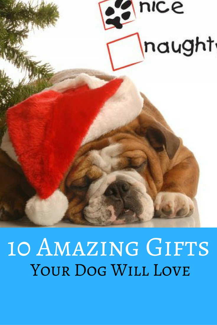 10 Amazing Gifts Your Dog Will Love https://www.pawlife.com/petcetera/10-amazing-gifts-dog-will-love/?utm_campaign=coschedule&utm_source=pinterest&utm_medium=Pawlife&utm_content=10%20Amazing%20Gifts%20Your%20Dog%20Will%20Love