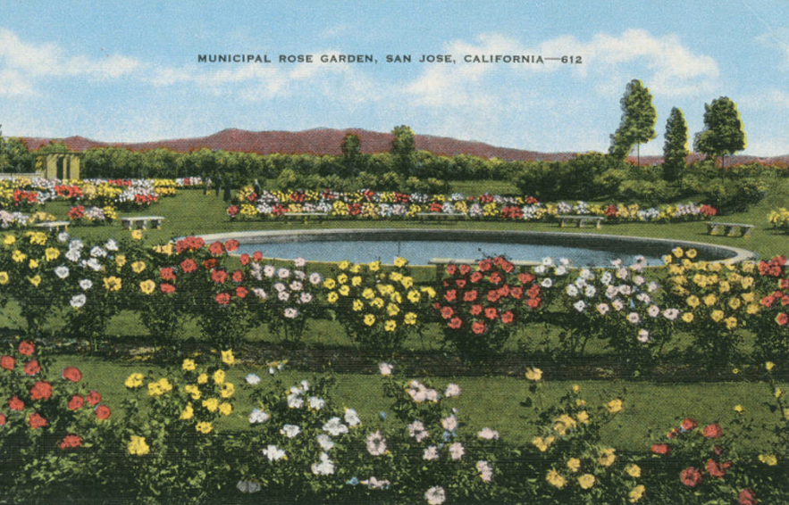 Postcard Of The Municipal Rose Garden San Jose California 1930 1950 Santa Clara County Santa Clara California