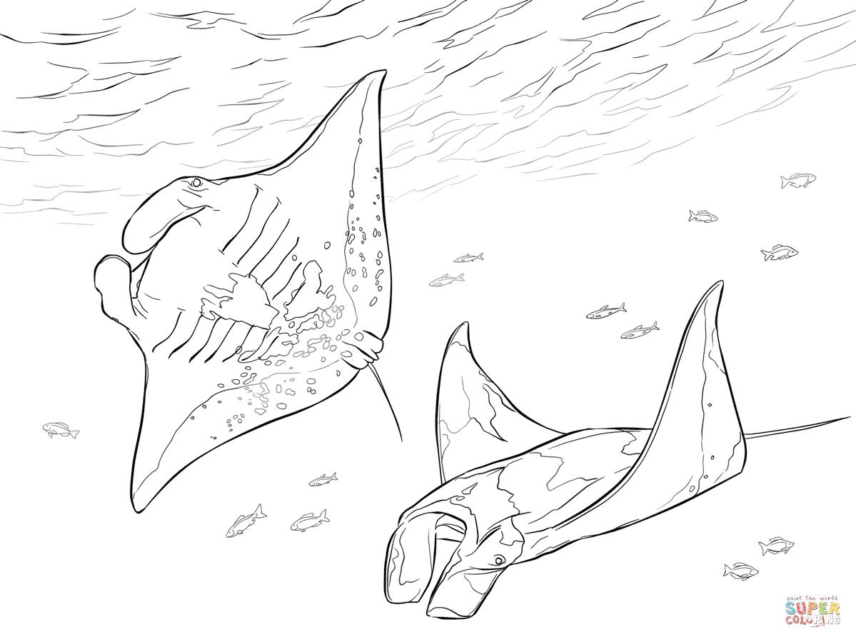 Two Manta Rays Coloring Page From Ray Category Select From 26992 Printable Crafts Of Cartoons Nature Animals Fish Coloring Page Manta Ray Tattoos Manta Ray