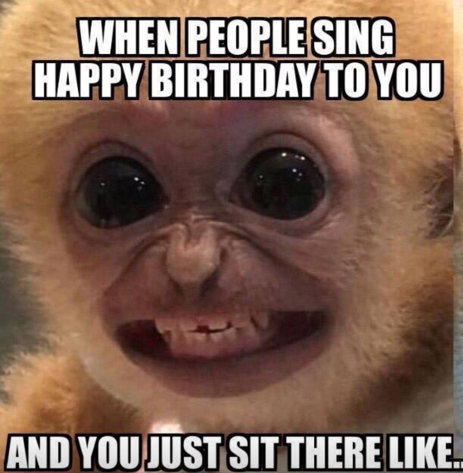 monkey happy birthday meme