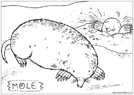 Mole Colouring Page Avengers Coloring Pages Coloring Pages Animal Coloring Pages