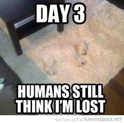 Lost Dog On Carpet Funny Animal Jokes Funny Animal Memes Animal Jokes