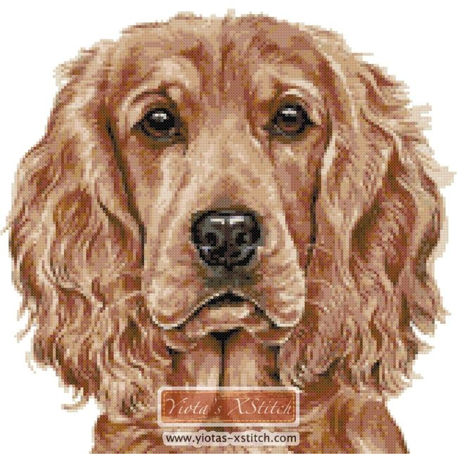 Pets//Spaniels//Dogs English Springer Spaniel Dog Counted Cross Stitch Kit