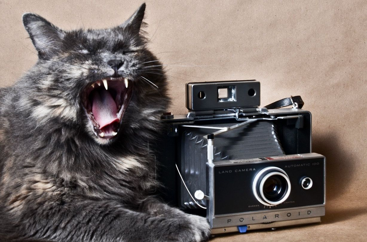 the cat & the Polaroid 100 cool camera cool cat Gatos