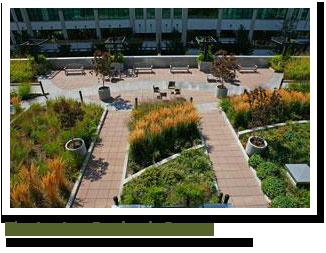 Benefits Of Green Roofs Green Roof Green Roof Benefits Landscape