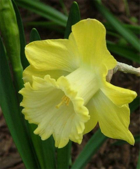 Selections From The John Scheepers Beauty From Bulbs Dutch Flower Bulbs Catalog Cicek Cicekli Desenler