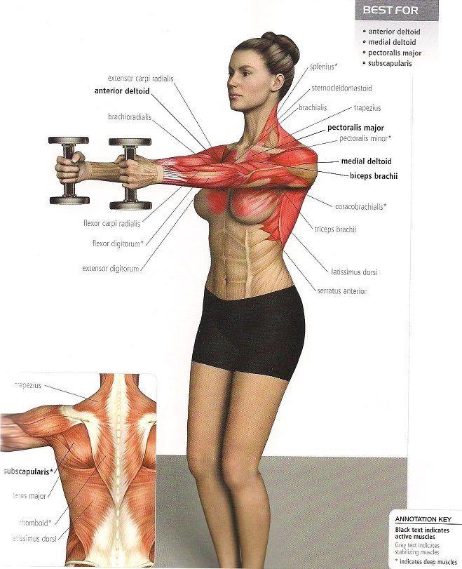 Pin de Lynette McGinnis en Chest/Underarm Exercises | Pinterest ...