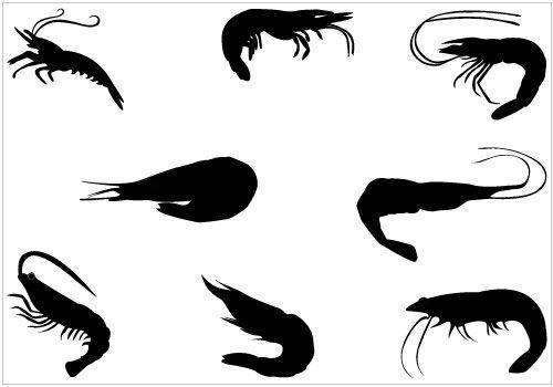 shrimp silhouette vector pack silhouette stencils pinterest rh pinterest com Pizza Clip Art Shark Fin Clip Art