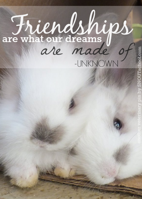Friendship quote from some adorable baby bunnies? Why not ...