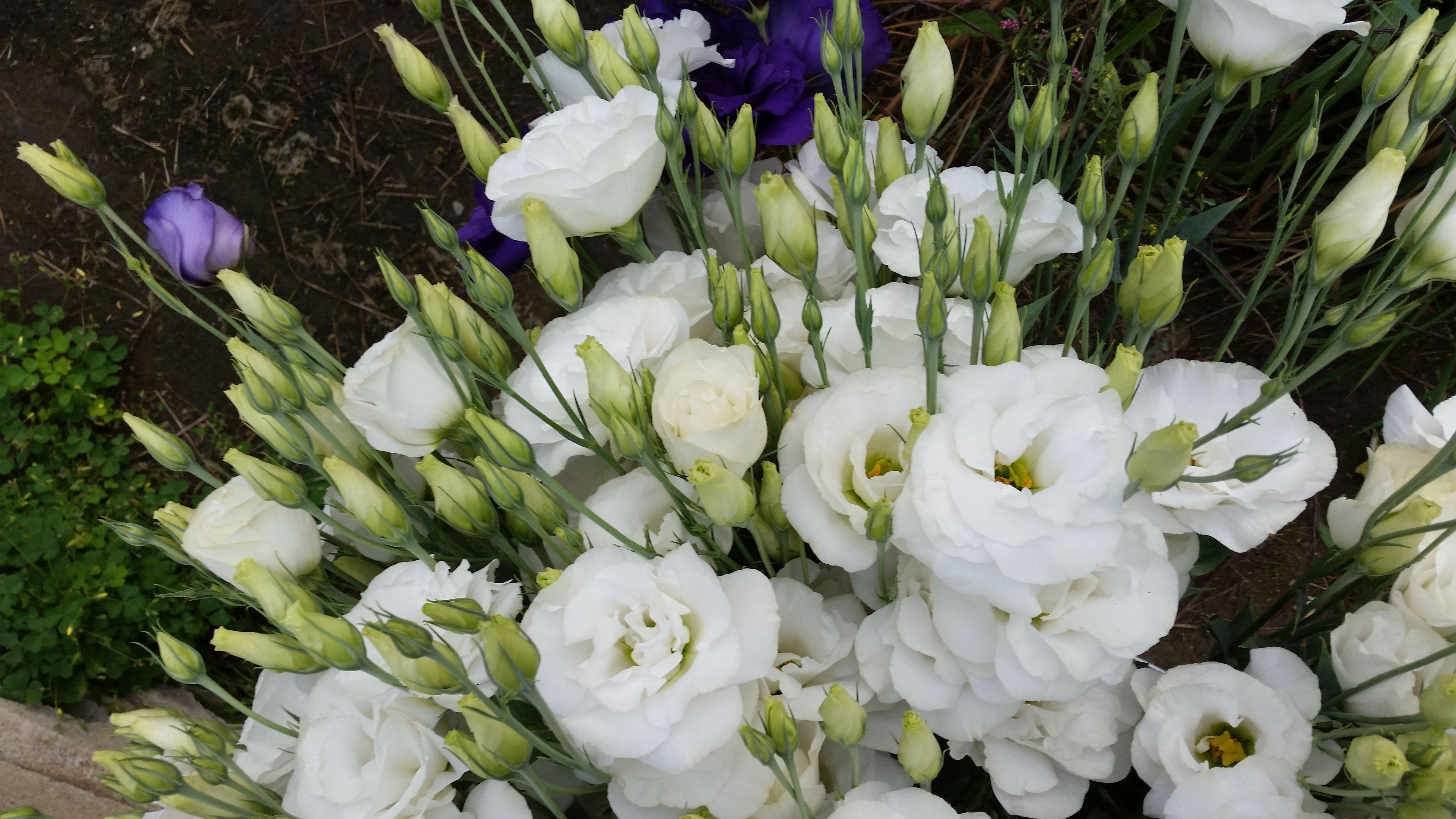 Lisianthus White July Pinterest September Flowers Flowers