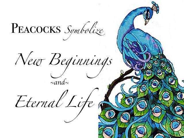 Quotes About Peacocks Quotesgram Peacock Tattoo Peacock