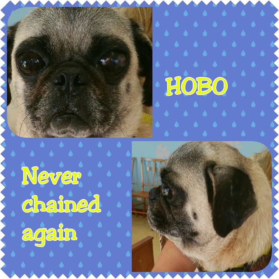 Hobo And His Pug Girlfriend Angel Had A Very Bad Life Eight