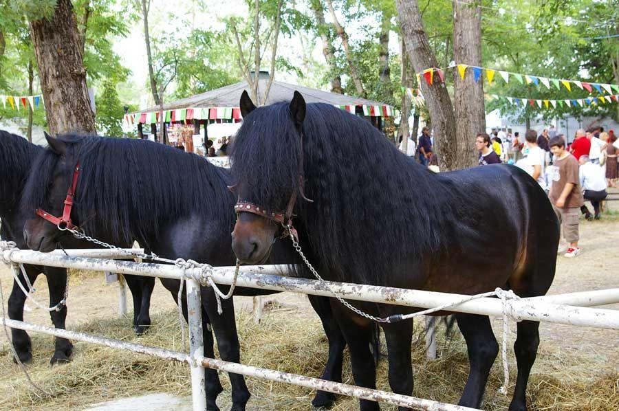 • Cavallo Bardigiano