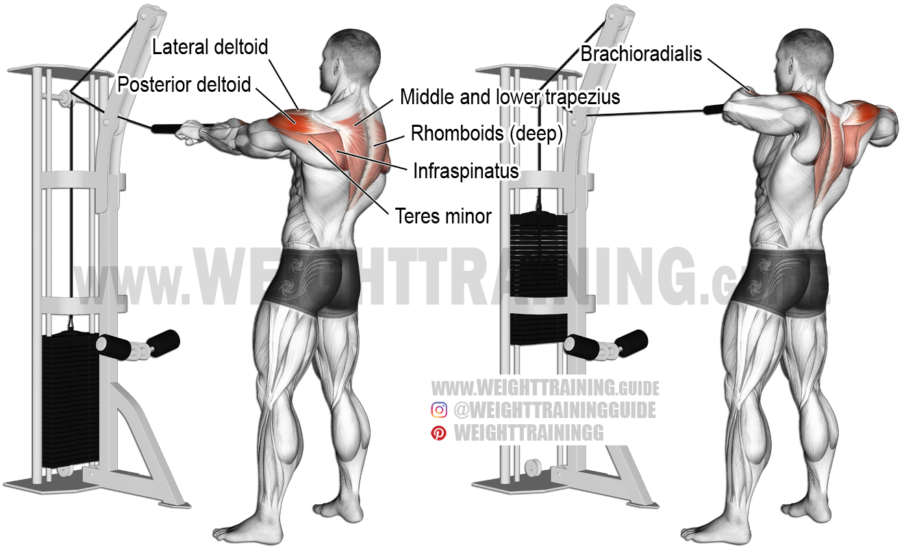 Standing Cable Rear Delt Row With Rope