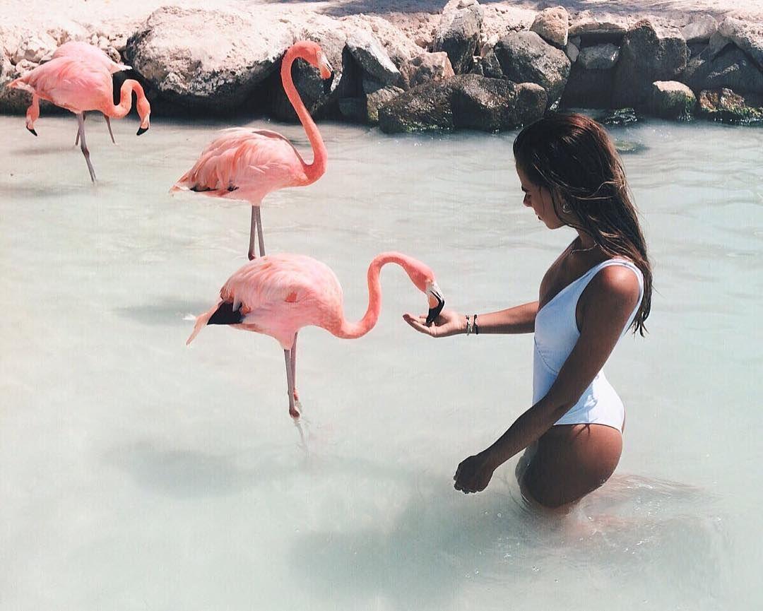 искусству фламинго картинки и человек заявлений