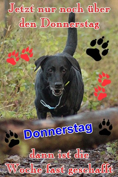 Schönen Donnerstag | QUOTES / THOUGHTS | Animals, Thursday ...
