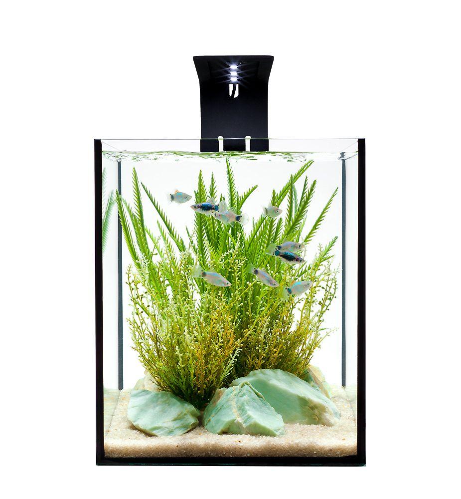 aquarium design group - effective aquascape design in a desktop