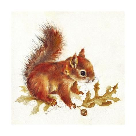 Giclee Print: Red Squirrel by Peggy Harris : 16x16
