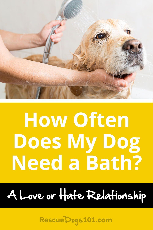 7 Important Dog Bathing Tips Dog Health Tips Dog Care Dogs